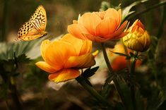 Diamantmalerei – Butterfly And Flowers Butterfly Pictures, Butterfly Flowers, Flower Pictures, Beautiful Butterflies, Flower Images, Beautiful Roses, Free Photos, Free Images, Japanese Cherry Tree