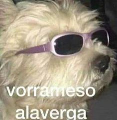 Cute Memes, Stupid Funny Memes, Funny Relatable Memes, Funny Spanish Memes, Spanish Humor, Foto Meme, Memes Lindos, Meme Stickers, Pinterest Memes