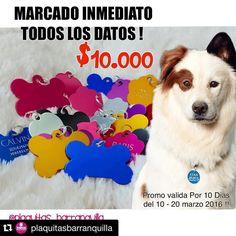 Todos debemos portar siempre nuestras plaquitas de identificación!   #Repost @plaquitasbarranquilla with @repostapp.  TAGGEA Y COMPARTE CON TODOS LOS PAPAS DE CHIQUIS - PERRRITOS - GATITOS!!  SEMANA DE LOCURAS EN @plaquitasbarranquilla  !!! ULTIMA MEGA PROMOCION DE PLAQUITAS DE IDENTIFICACIÓN!!!  Tan solo $10.000 INCLUYEN MARCADO CON TODOS LOS DATOS QUÉ DESEES!!  !! @plaquitasbarranquilla  Lleva 5 años CON EL MISMO precio de sus Plaquitas!! No hemos aumentado Porque Nuestra MISION de…