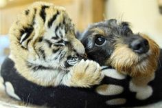 Interspecies love