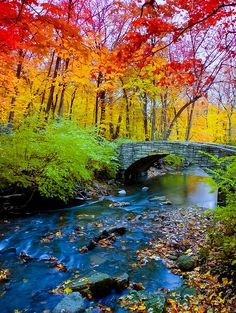 """djferreira224: """" """"Fall Music"""" Northwoods in Eagle River, Wisconsin """""""