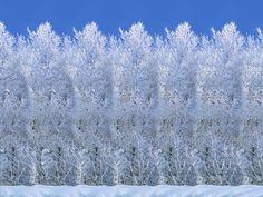 Stereogrammi Stereogramma_7 pupazzi di neve
