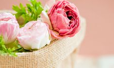 Pretty pink peonies are one of my all time favorite flowers! Good thing it's also so easy to grow and plant peonies. Peonies Wallpaper, Wallpaper Rose, Ipad Rose, Black Magic Love Spells, Types Of Flowers, Flowers Bunch, Flowers Pics, Wallpaper Free Download, Peony Flower
