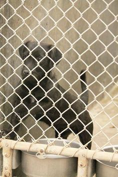 OWNER SURRENDER! JUST NOW! Terrier male 1-2 years old. Kennel A10**$51 to adopt URGENT** Available NOW!! Go down now and save a life!! This cute little guy was just unceremoniously dropped off like yesterday's news. Help him get a new home before it's too late. Odessa TX Animal Control. https://www.facebook.com/speakingupforthosewhocant/photos/a.573572332667009.1073741829.248355401855372/758304887527085/?type=1&theater