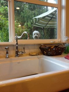 This gets me every time. #jackthegoldendoodle theinspireddogblog.com