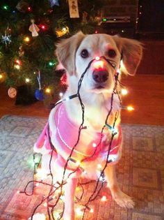 Sweet Christmas pup!