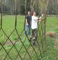 Картинки по запросу Hedge Laying