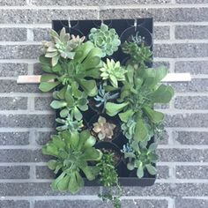 Pre-planted HG2X - Succulent Living Wall