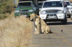 Tansania – Besucherzahlen im Serengeti Nationalpark steigen jedes Jahr