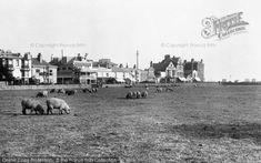 Photo of Bognor Regis, Waterloo Square, Sheep Grazing 1921 Bognor Regis, Seaside Holidays, Holiday Photos, Sheep, Dolores Park, Beach, Travel, Retro, Vintage
