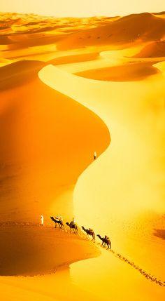 Camel train - Crossing the Sahara
