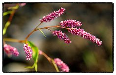 Foam Flower, Quebec | A. Espetveidt | Quadrophonic Image via Viewbug