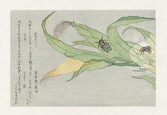 Evening Cicada, higurashi, Spider, kumo USD $225 Kitagawa Utamaro Ehon Mushi Erami Woodblock Prints