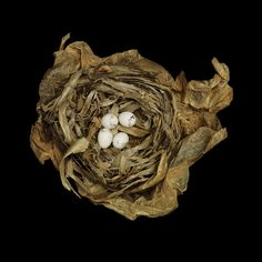 Birds' nests are miniature marvels of architecture.