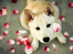 Saiba qual shampoo é mais apropriado para cada pet na hora do banho. Mesmo sendo seu cachorrinho um fiel amigo, não divida com ele seus produtos de higiene.