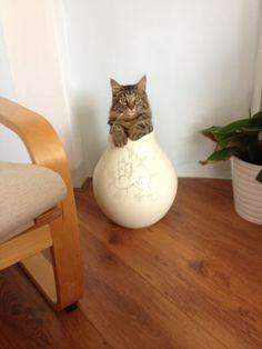 Sizin kediniz de evde bulduğu her deliğe girmeye çalışanlardan mı?
