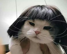 YOONJI MY DARLING, IS THAT U? Cute Baby Cats, Cute Funny Animals, Cute Baby Animals, Kittens Cutest, Animals And Pets, Cats And Kittens, Funny Cats, Funniest Animals, Funny Animal Pictures