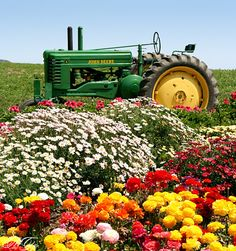 Tractor in the Flower Fields - Carlsbad, California