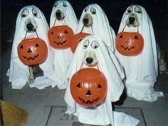 Treats no Tricks Please...I know theses are Labs but I think Goldens would sit thru this as well!