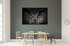 The evil eyes, Eagle Owl, Bubo bubo №2339