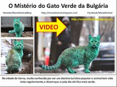 Mural Animal: O Mistério do Gato Verde da Bulgária
