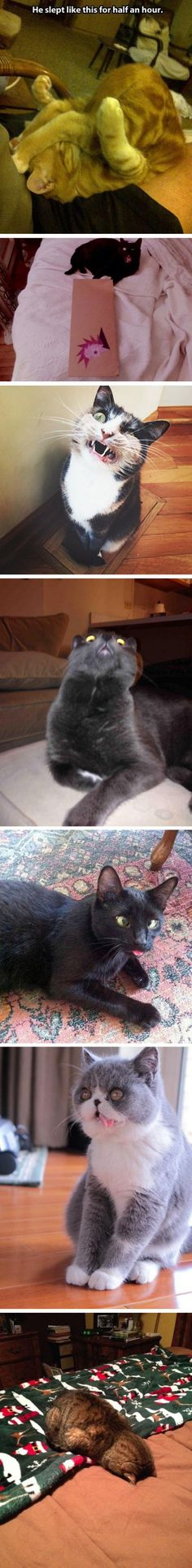 Crazy Cats  - Visit http://dailyhaha.com/pictures.htm for daily funny pictures. #funny #cats