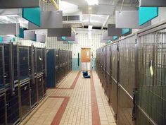 T-Kennel: Modular Kennel Systems Dog Kennel Designs, Kennel Ideas, Shelter Dogs, Animal Shelter, Doggie Day Camp, Dog Teeth, Dog Runs, Cool Pets, Teeth Cleaning
