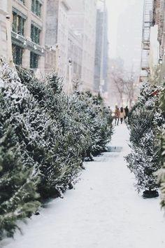 Weihnachtsbäume ...