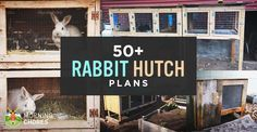 50 Free DIY Rabbit Hutch Plans & Ideas to Get You Started Keeping RabbitsWant to keep rabbit for meat or pet? You need to build a rabbit hutch. a collection of 50 free DIY Rabbit Cages Outdoor, Rabbit Hutch Indoor, Rabbit Hutch Plans, Rabbit Hutches, Rabbit Pen, Rabbit Farm, House Rabbit, Diy Bunny Cage, Bunny Cages