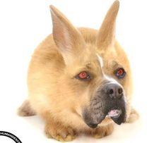 Nice pets blog. » Blog Archive » Unusual animals (photoshop)