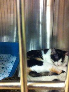 07/24 pet smart adoption thru fur kids