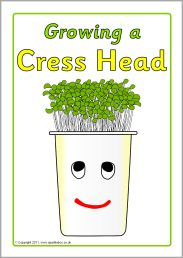 Growing a cress head squenced instructions (SB4319) - SparkleBox