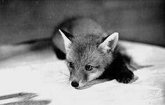 Fox!!!!!