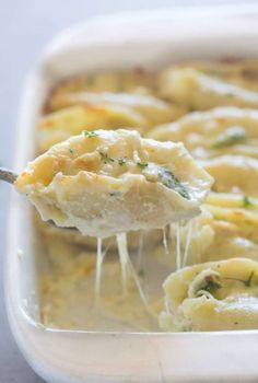 Chicken and Broccoli Alfredo Stuffed Shells | Tastes Better From Scratch