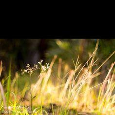 Dandelion, Flowers, Plants, Travel, Viajes, Dandelions, Destinations, Plant, Traveling