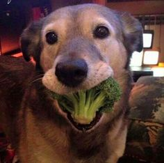 Doggo getting 1 of his 5 a day http://ift.tt/2jIx7rs