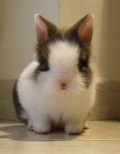 I just want to hug it! #rabbit