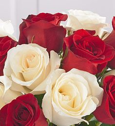 Red & white roses - together;