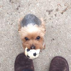 Haha! My friends dog loves her soccer ball!!!! :) she's the cutest! I think everyone will agree too!!