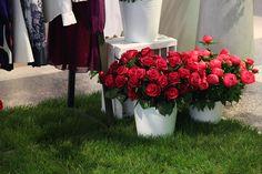 Uzwei Store in Hamburg Store, Flowers, Plants, Hamburg, Tent, Larger, Floral, Business, Plant
