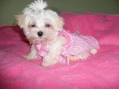 My baby girl Malley~