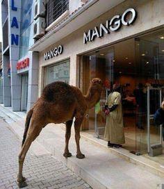 Only in Algeria :) pays de contrastes!