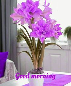 Here are beautiful Daily Wishes with good pictures of morning, afternoon and All of the daily wishes, quotes and greetings Good Morning Gif Funny, Good Morning Gif Images, Good Morning Wednesday, Good Morning Images Flowers, Good Morning Beautiful Images, Cute Good Morning, Good Morning Picture, Good Night Image, Good Morning Greetings