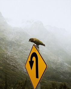 Funny Nature   A bird with a plan   Milford Sound