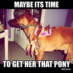 Time for the Pony!
