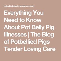 Everything You Need to Know About Pot Belly Pig Illnesses Hip Injuries, Pot Belly Pigs, Mini Pigs, Pet Pigs, Flying Pig, Helping People, Need To Know, Everything, Knowledge