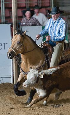 Playboys Buck Fever, 6666 Ranch NRCHA Supreme Reined Cow Horse