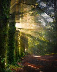 Sunrise in Mount Macedon, Victoria, Australia. Nature Pictures, Beautiful Pictures, Image Nature, Beautiful Forest, Tree Forest, Landscape Photographers, Belle Photo, Beautiful Landscapes, Beautiful Scenery