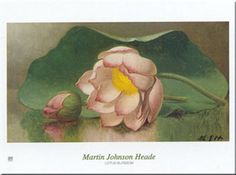 Lotus Blossom Pôsters por Martin Johnson Heade na AllPosters.com.br