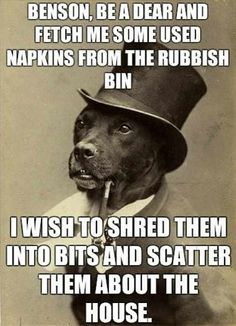 Gentleman dog has a request…